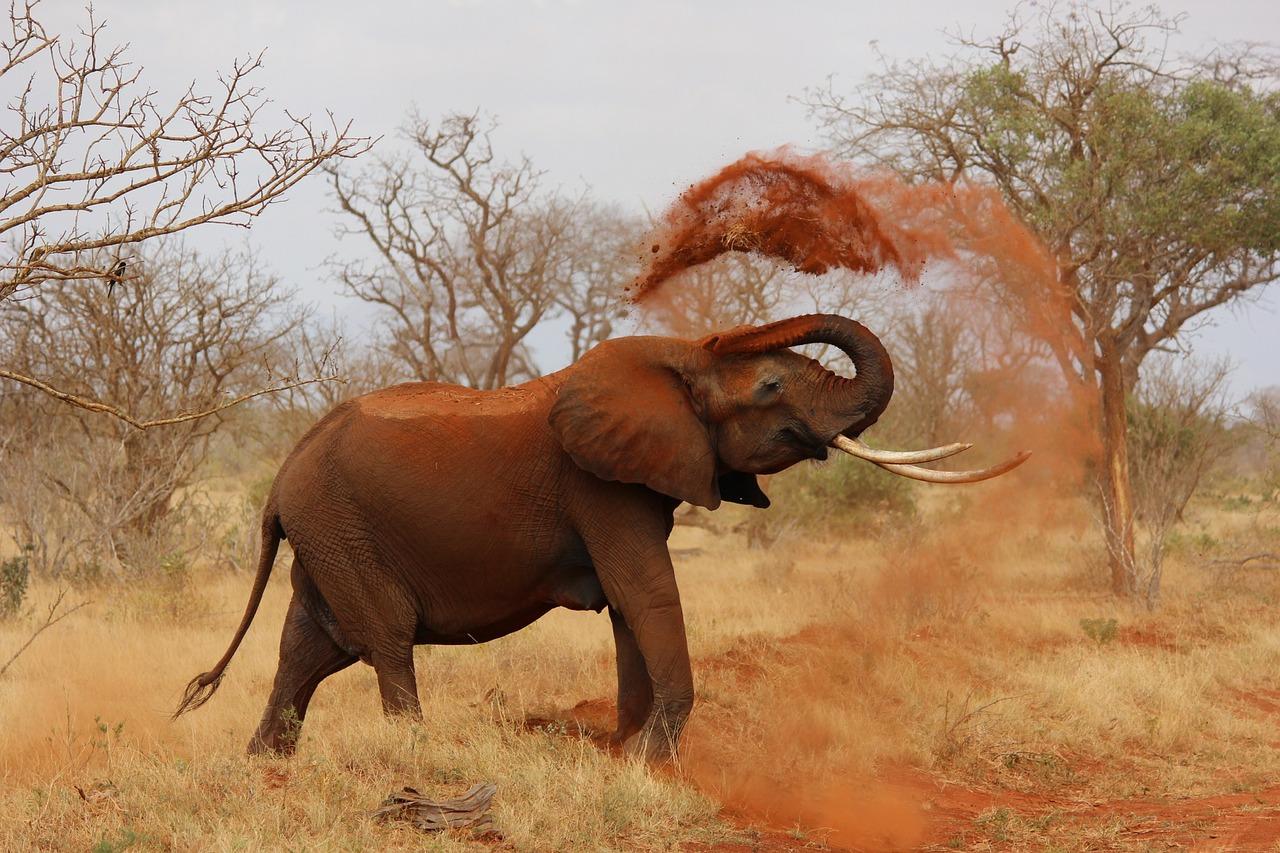 Afrika travelyst gabun
