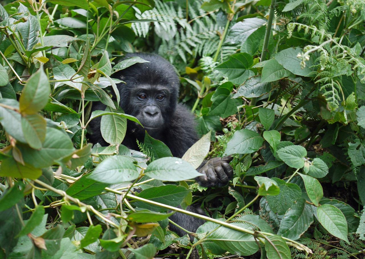 Afrika travelyst kongo